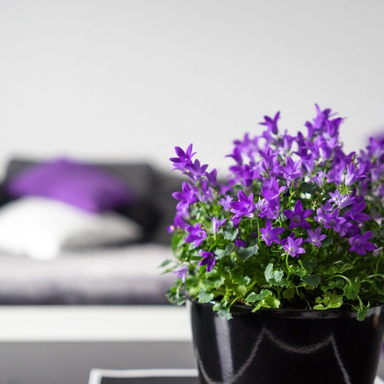 violet-2374509_1920